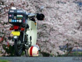 今週の日記ピックアップは、カブでトコトコ桜咲く駅巡り[KENZ.Kさん ツーリング日記]